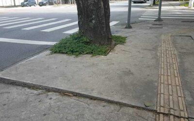 Raízes de árvores quebram calçadas. Escolhas inadequadas prejudicam a acessibilidade.